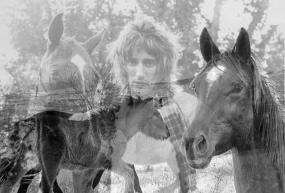 rod stewart horse