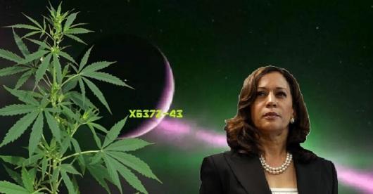 marijuana_planet
